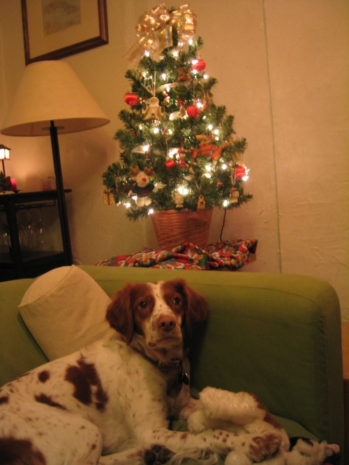 Honey, cozy by the tree